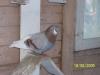 hokbezoek-2005-4